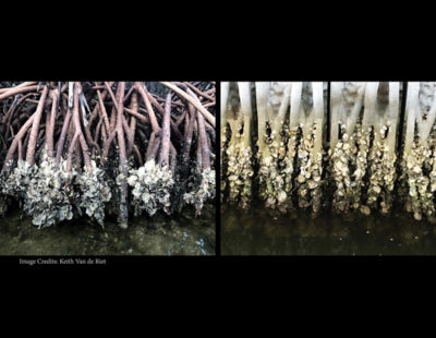 biomimicry-mangroves-improve-coastal-erosion-coastal-barriers-comparison.jpg